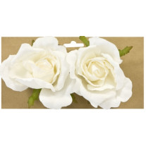 roses bouton blanches